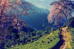 Conseils de voyage Darjeeling