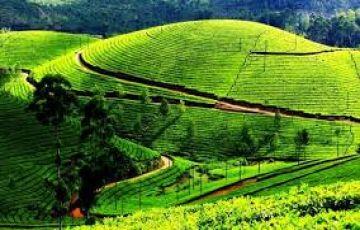 Darjeeling voyage